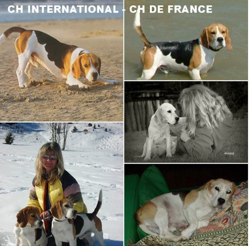 ch international, ch de france, Elevage de Maxcecan